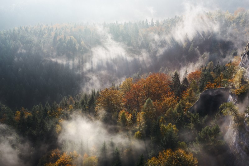 Overlooking foggy mountain with pine trees