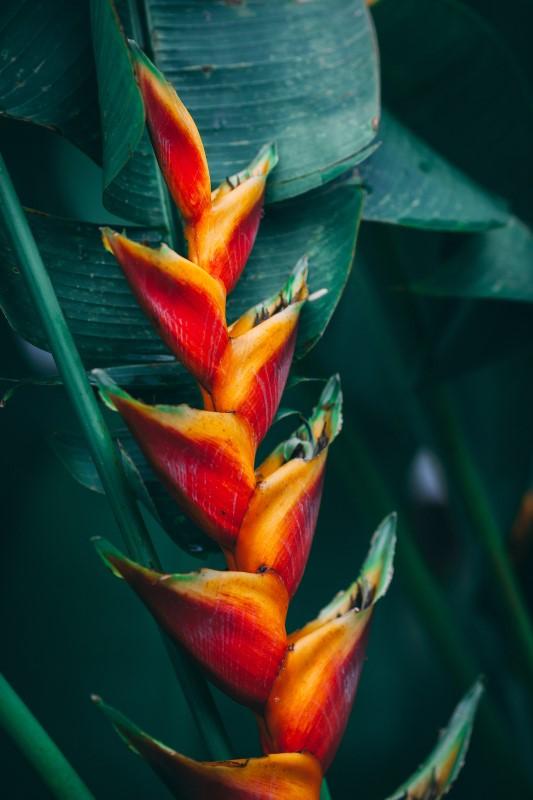 Jamaica flora