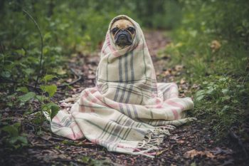 Yoda dog blanketed in a forest