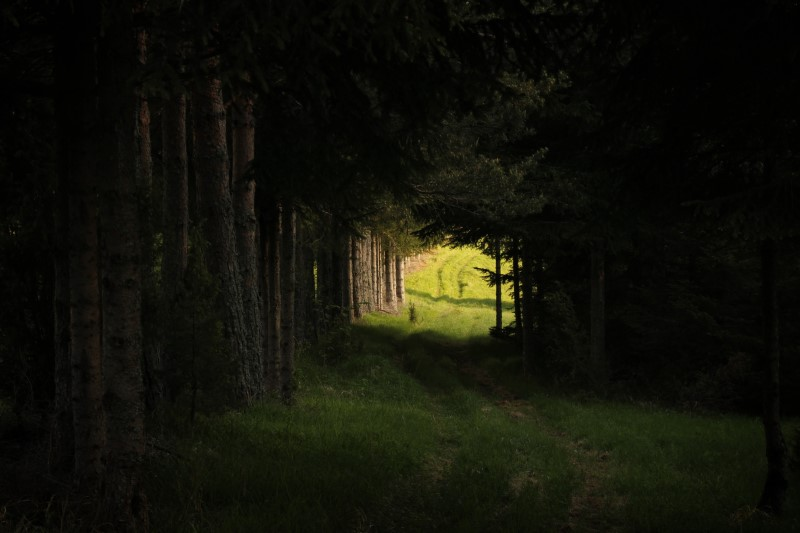 dark forest with path leading to a light clearing