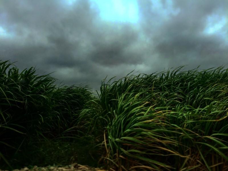a dark windy cloudy day