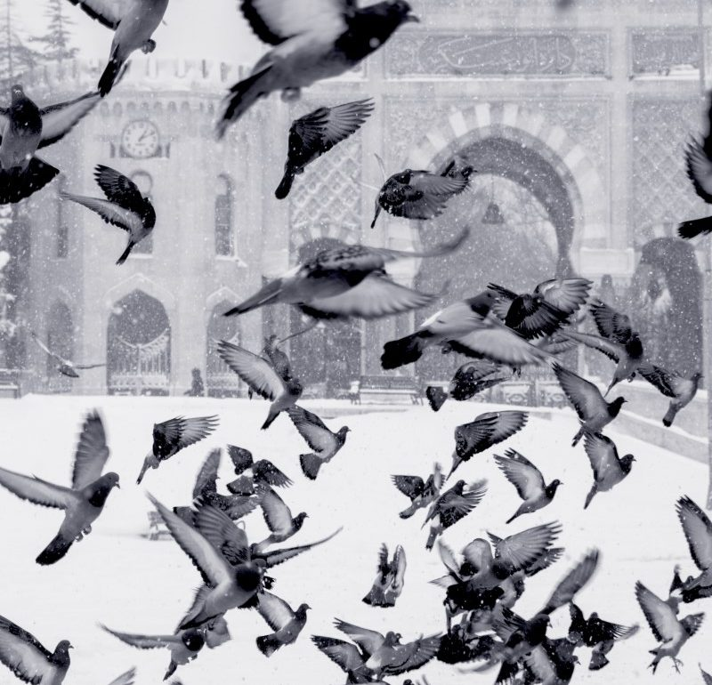 birds flying over snow in front of a building in Istanbul, Turkey