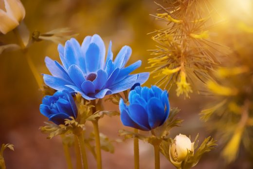blue flowers on gold background