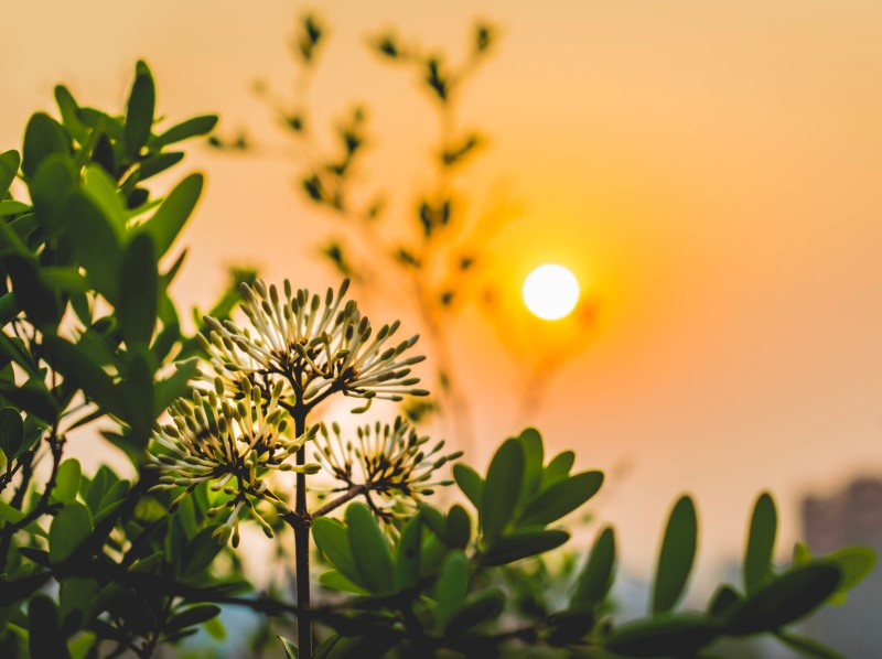 green plants in front of a yellow sun