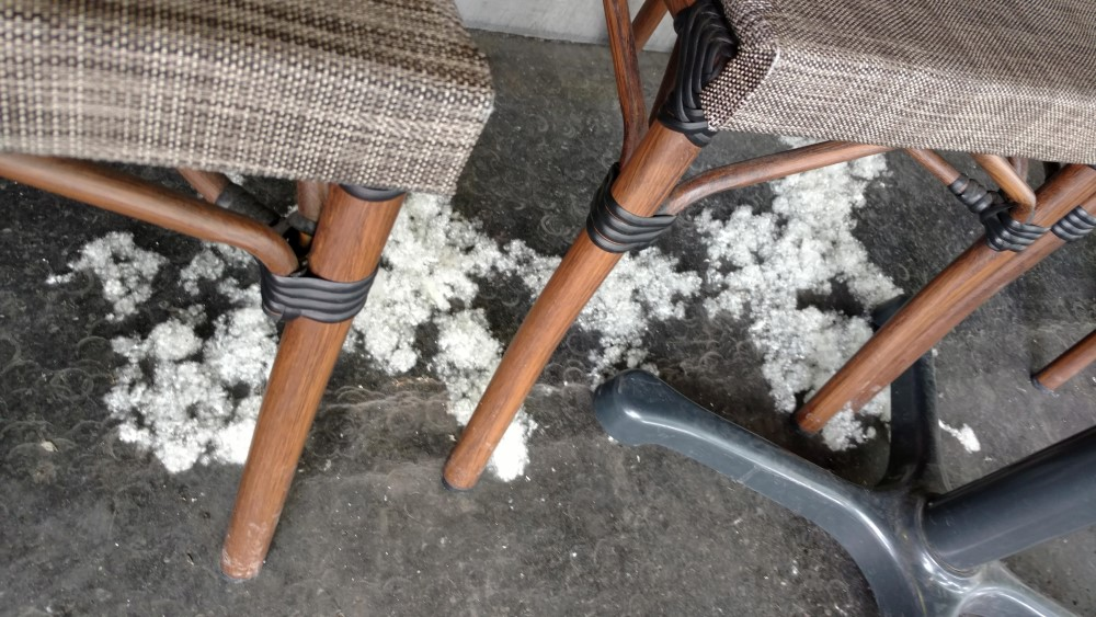 seeds from trees underneath chairs at a Paris cafe
