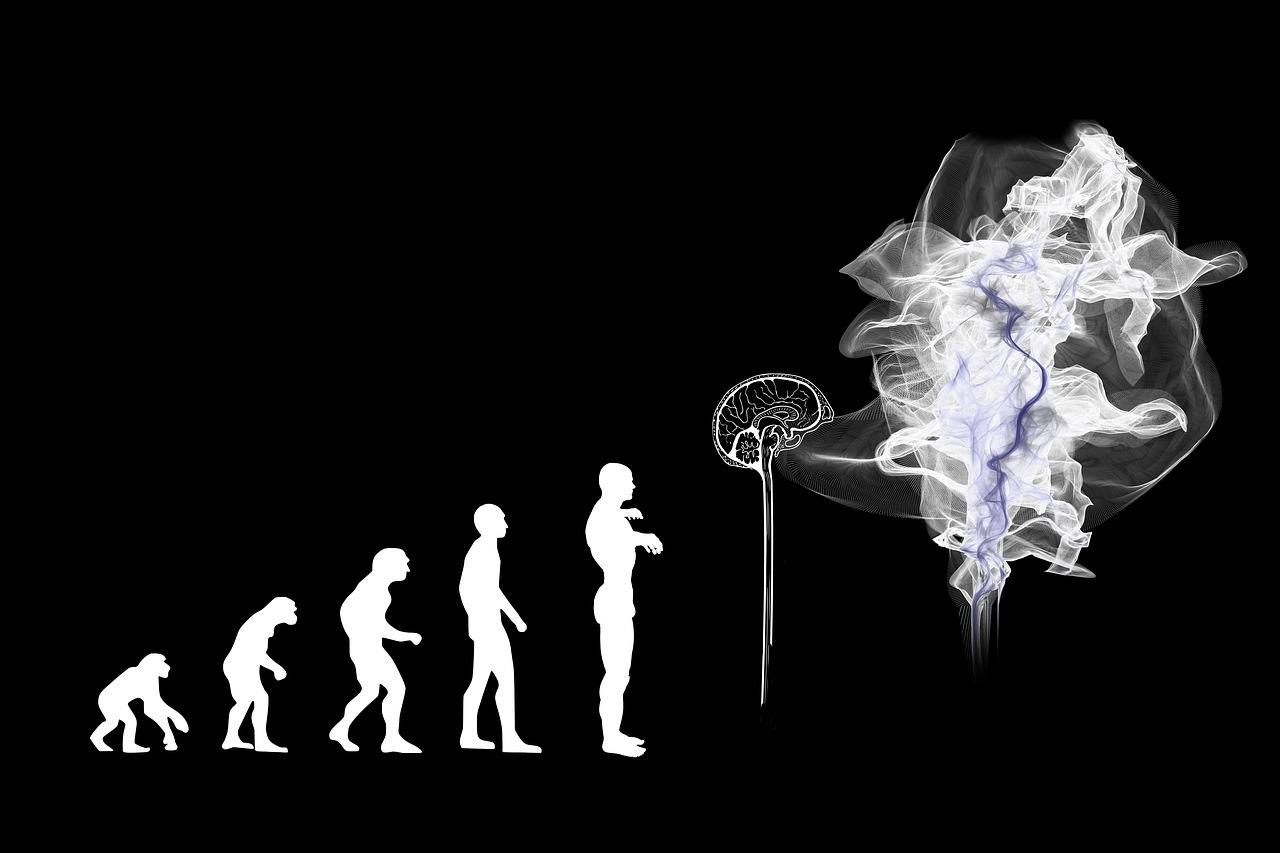 evolution of humans