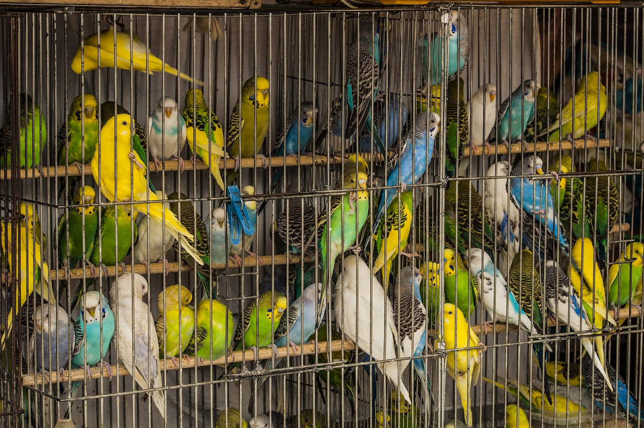 yellow, white, blue, and green parrots behind a cage wall - so many bright colorful birds - which represents another way to text a girl, woman, boy, man, or other divine spirit