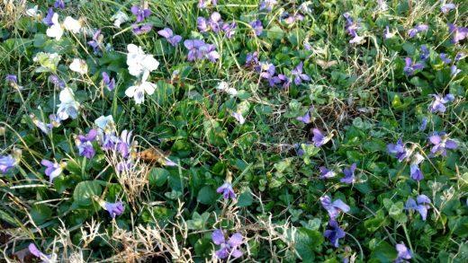 flowers in backyard