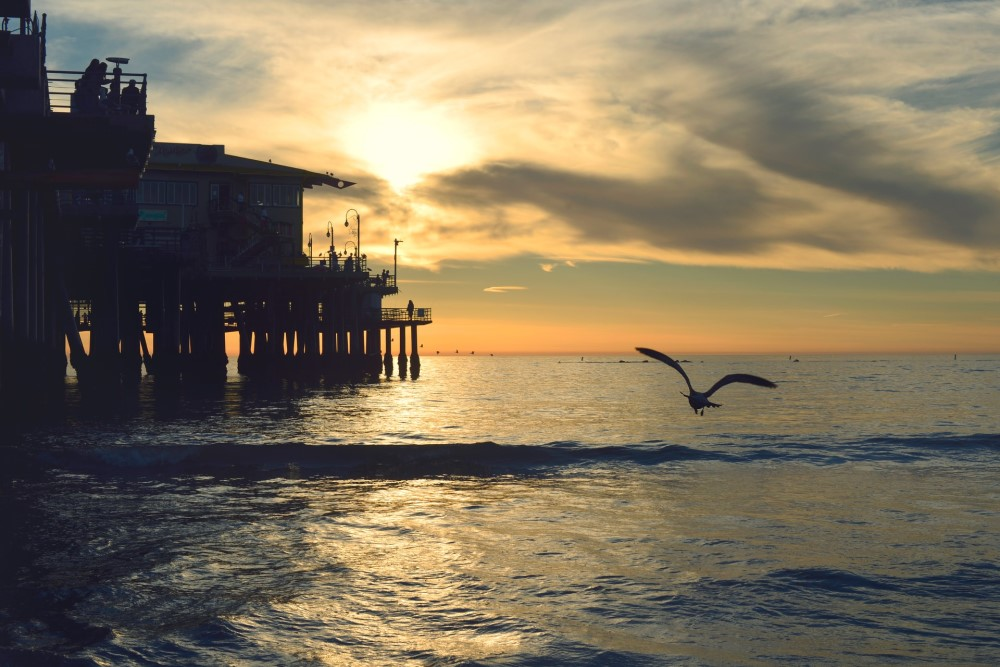 bird flying over ocean with setting sun and pier