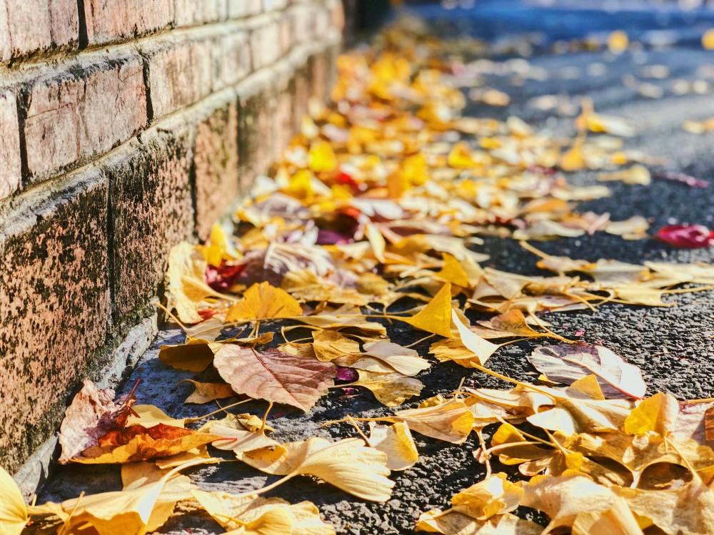 yellow leaves by brick wall