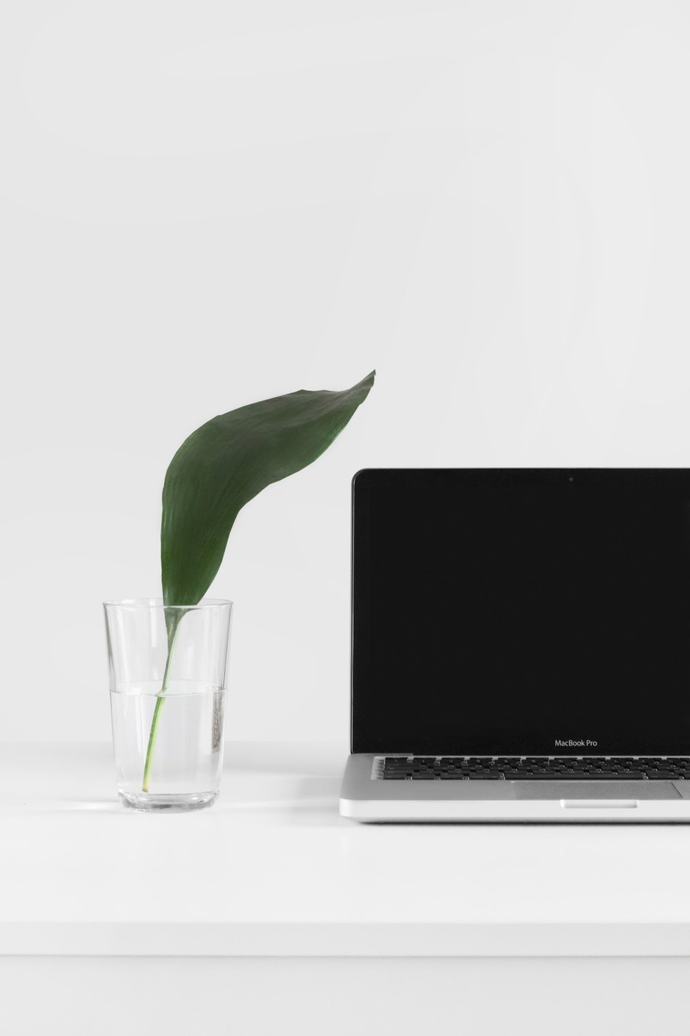 leaf next to computer