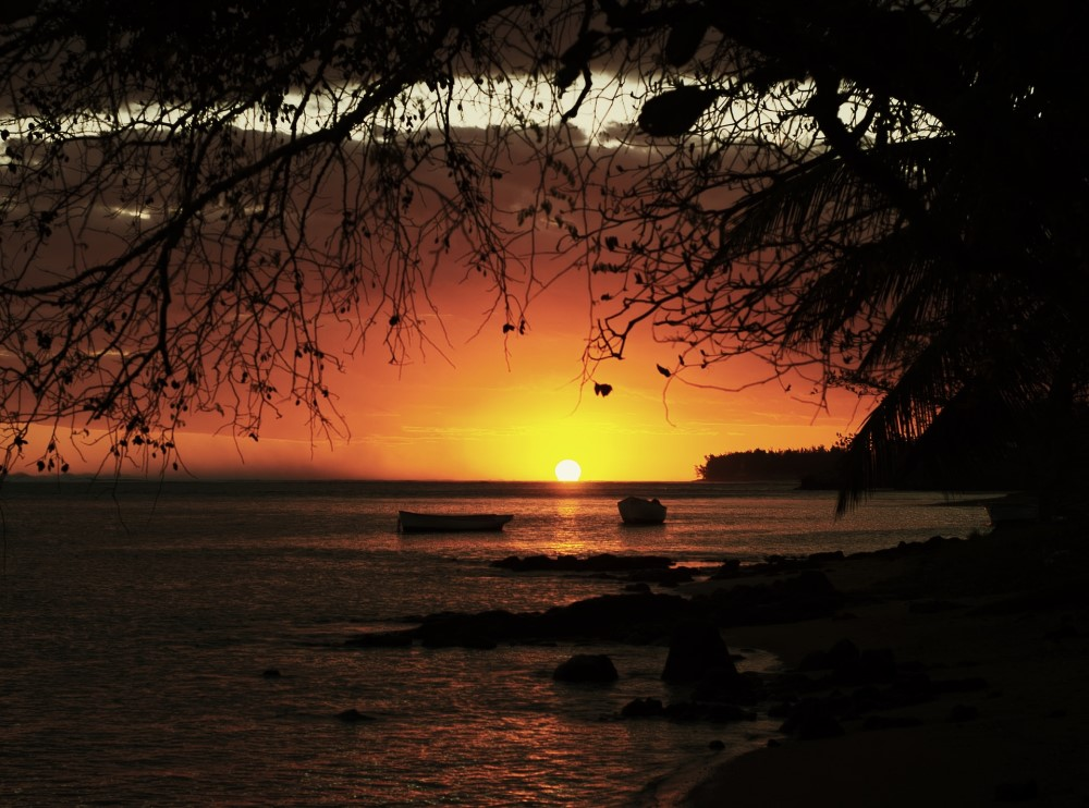 dawn with a tree and boats and water