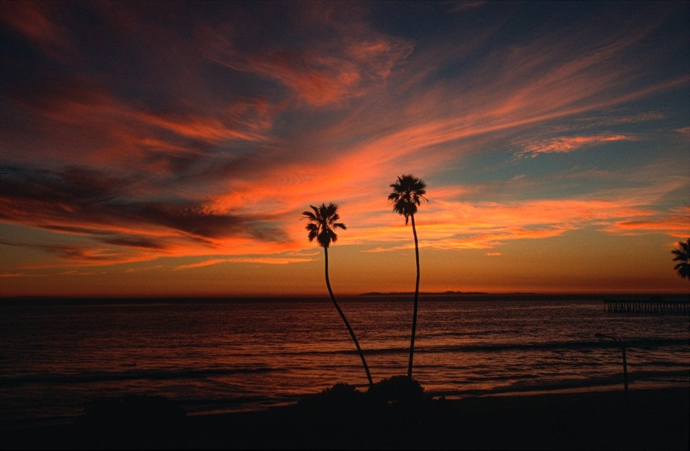 dusk with palm trees by ocean
